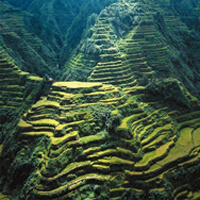 Banaue Rice Terraces in the Philippines. 2000-year old terraces created to provide steps where farmers could grow rice.